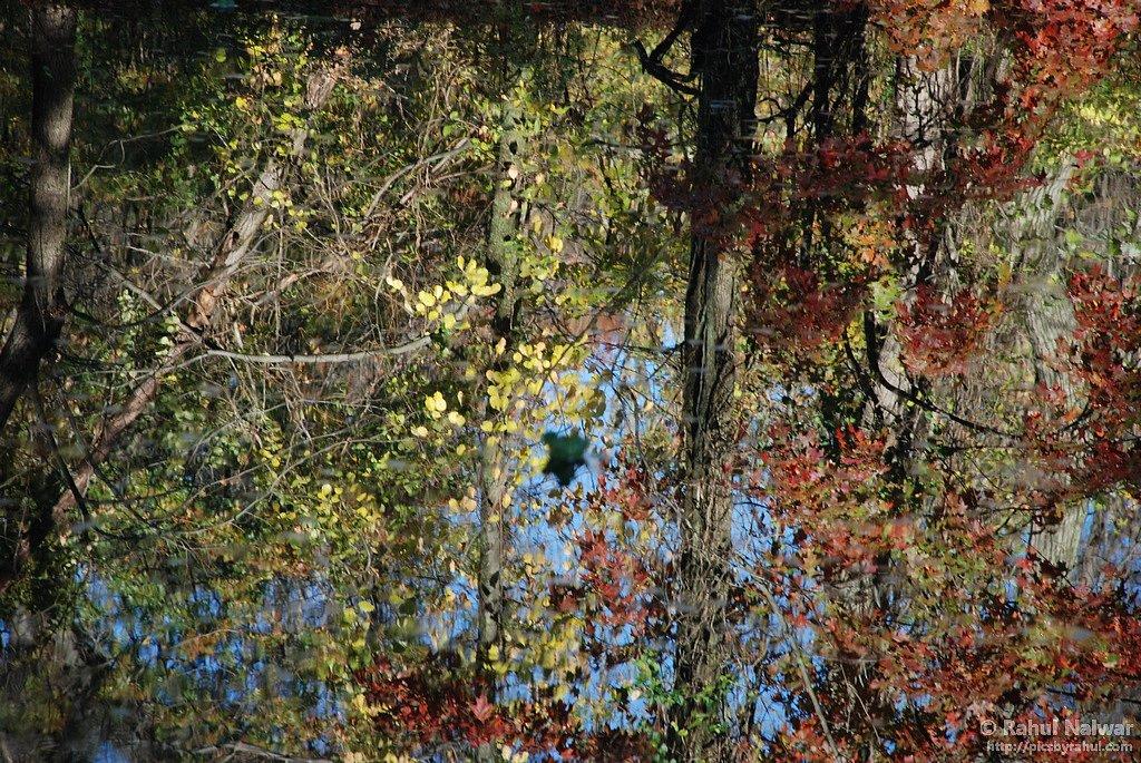 Fall colors - Princeton